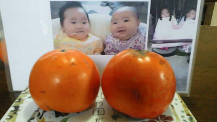 双子の孫「はら&さら」と柿のコラボ